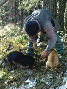 Truffle hunting
